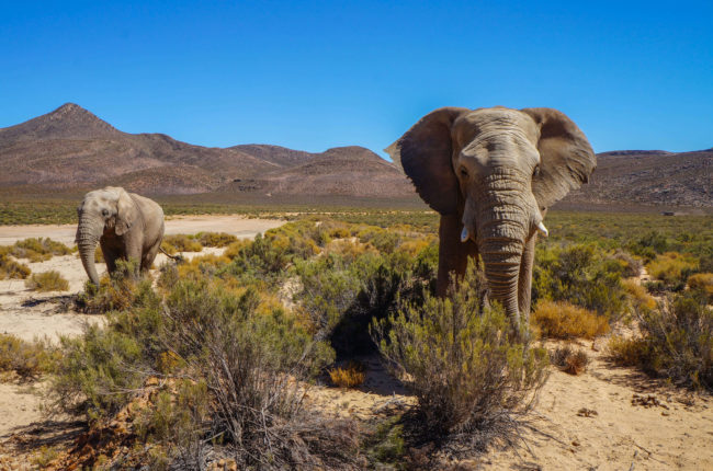 travel-south-africa-how-to-plan-for-your-trip-to-cape-town