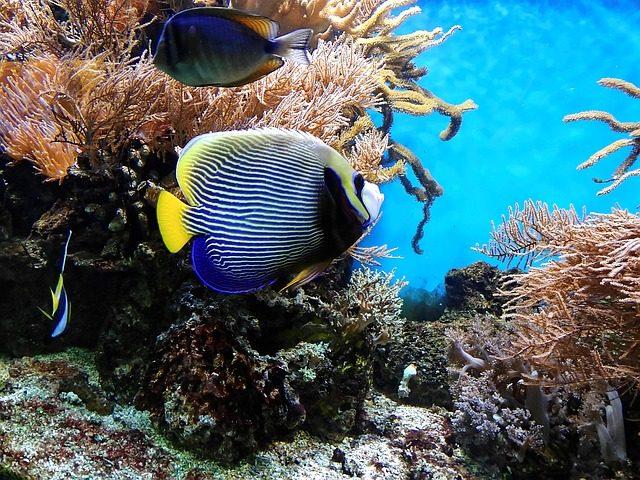 aquarium connecticut